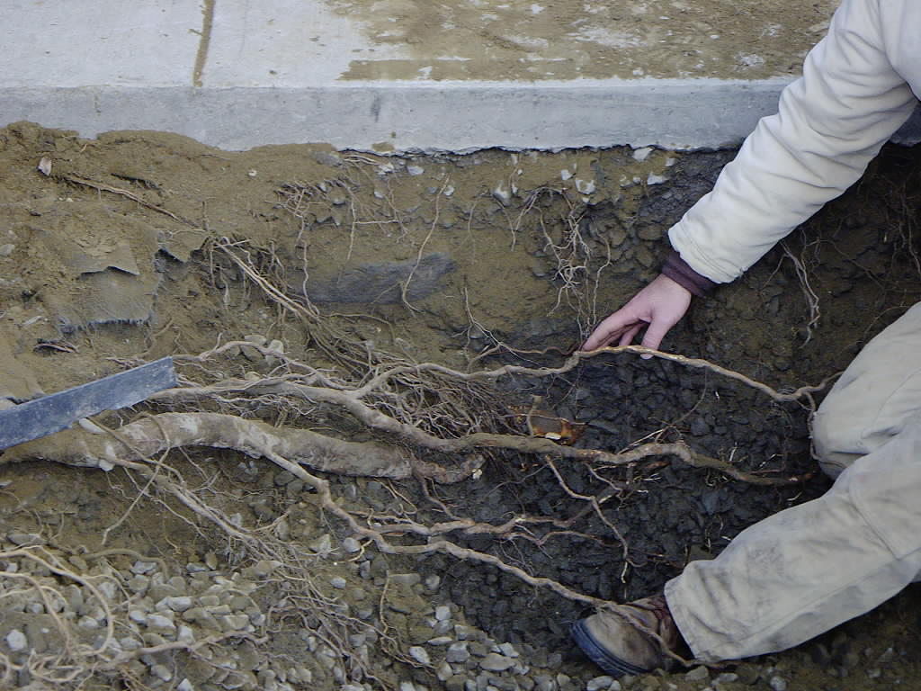 5 read about urban tree planting for Soil as a system